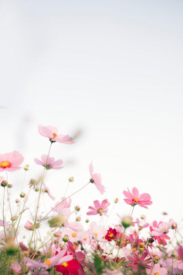 Primavera, tempo di rinascita